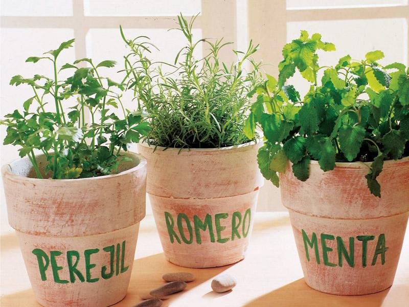 El cultivo de plantas arom ticas y medicinales en casa - Plantas aromaticas en casa ...