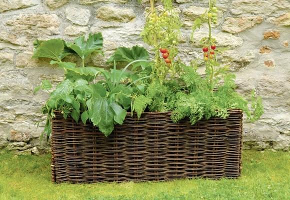 Cultivar verduras y hortalizas ecol gicas en nuestra for Cultivar vegetales en casa