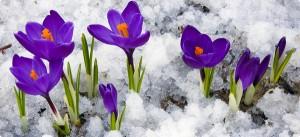 Flores cuidados