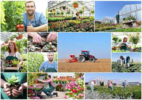 Collage Landwirtschaft und grtnerei, Anbau und Produktion von Ge