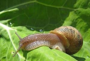 Como controlar las plagas en nuestro jard n blog de for Caracol de jardin