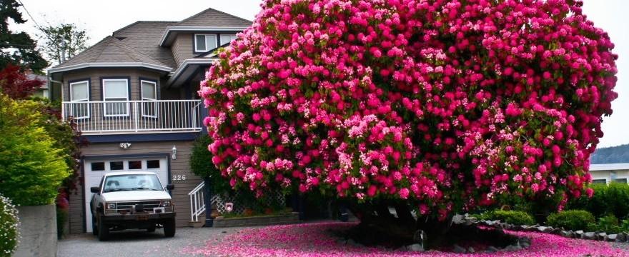 Abonos ecol gicos y fertilizantes ecologicos agrobeta blog - Rododendro arbol ...
