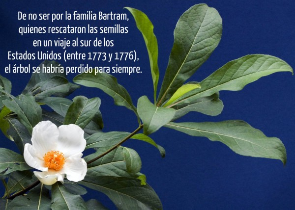 Flores 15