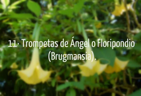 Flores 35