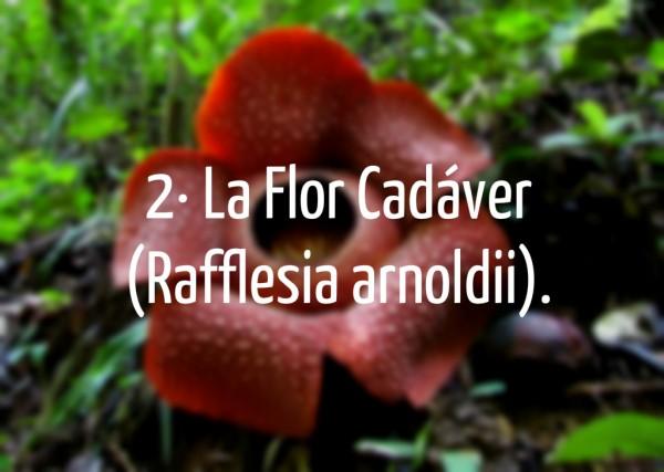 Las 13 flores y plantas m s extra as y curiosas del mundo for Plantas decorativas con sus nombres