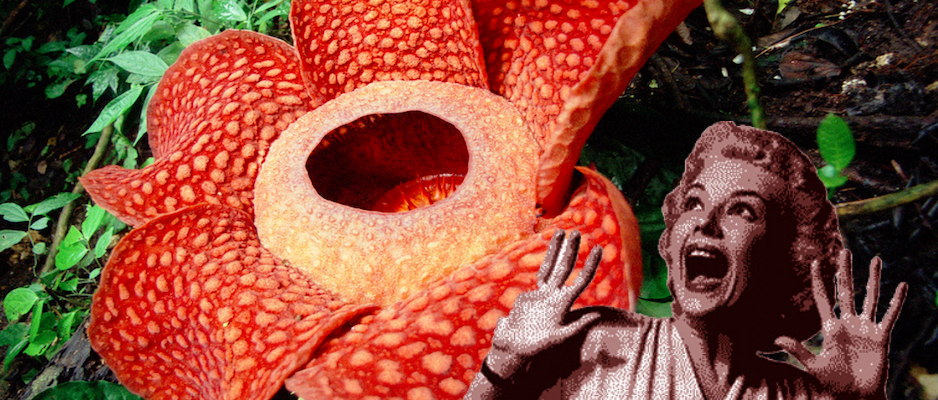 Flores-plantas-más-raras-del-mundo-extrañas