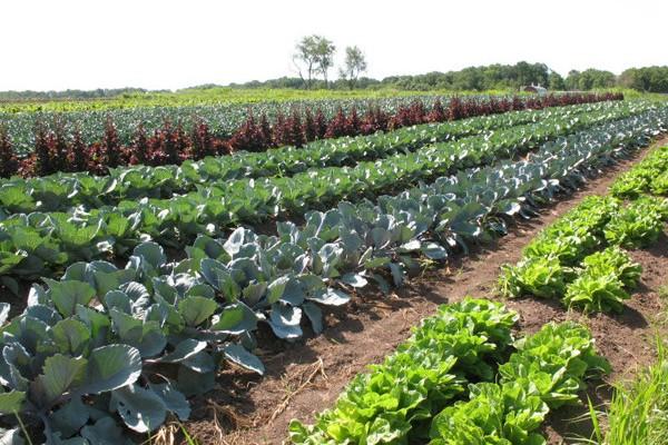 organic-farm-go-organic3-600x400