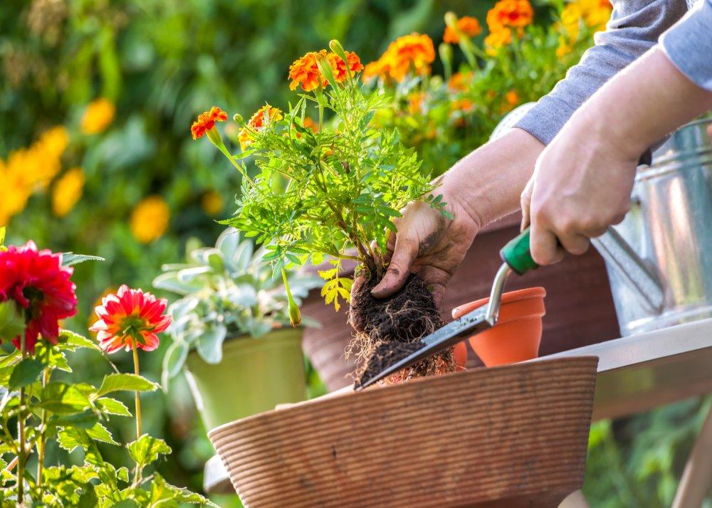 20 consejos de jardinería que te encantará conocer | Blog de ...