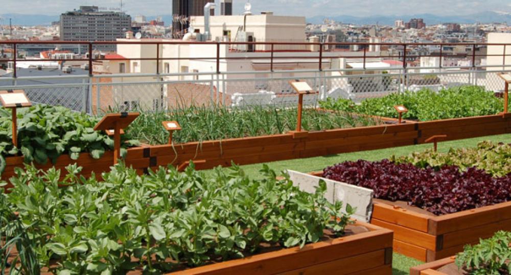 Abonos ecol gicos y fertilizantes ecologicos agrobeta blog - Huerto urbano malaga ...